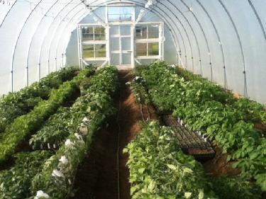 Cheap-Homemade-Greenhouse-Quick-Hoop-House-Bender